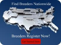 Pure Breed Dog Breeders